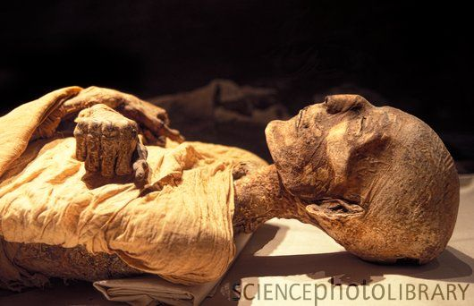 merneptah-mummy.jpg