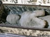 NEWS: German boy finds 'a mummy' in grandmother's attic